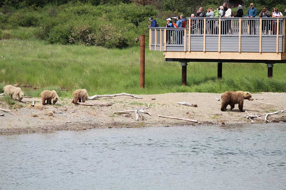 Building a New Bridge Among Thousands of Bears in Katmai National Park & Preserve