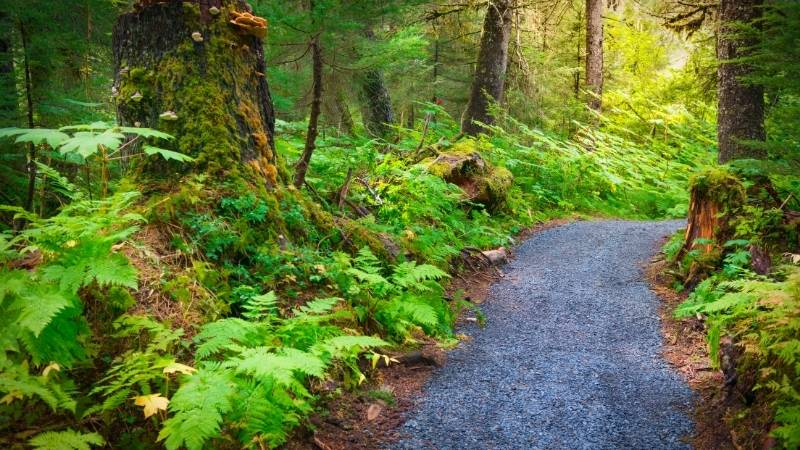 USDA Seeks Public Input on Outdoor Projects for 2022 and Beyond
